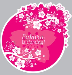 Cherry Blossoms or Sakura flowers Label vector image