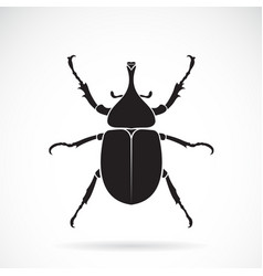 dynastinae on a white background insect animal vector image
