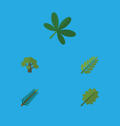 Flat icon nature set of maple spruce leaves vector
