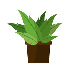 green plant in a pot vector image