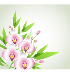Pink orchids and green leaves vector image