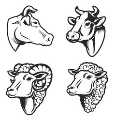 Set of cow and sheep heads on white background vector