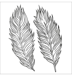 Vintage feather set hand-drawn vector