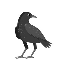 Big rugged black crow isolated on white background vector
