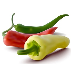 red green and yellow peppers vector image