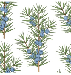 Seamless pattern with a sprig of juniper vector
