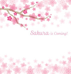 Cherry blossoms or sakura flowers background vector