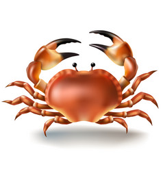 Badges stickers crab in vector