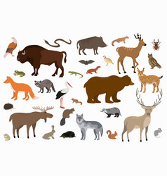 collection cartoon forest animals and vector image