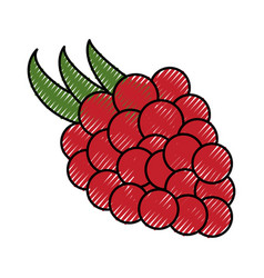 Grapes delicious fruit vector