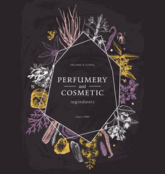 Hand drawn perfumery and cosmetics ingredients vector