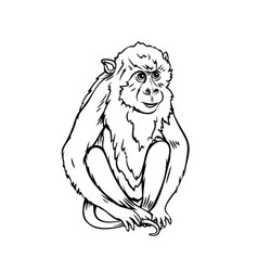 monkey macaque icon vector image