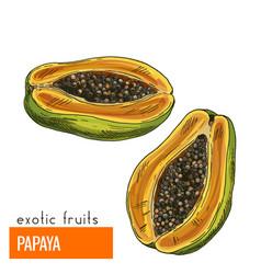 Papaya color vector