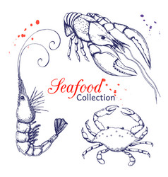 seafood collection hand drawn engraved seafood vector image