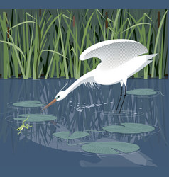 White heron hunts in the reeds vector