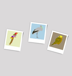 Polaroid photo of stork owl parrot vector