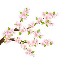 Sakura branch isolated vector