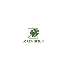 simple minimalist monstera leaf for garden vector image
