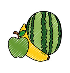 Watermelon banana and apple fruits vector