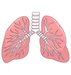 Human lung cartoon vector image vector image