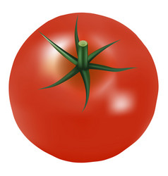 Big ripe red fresh tomato with parsley isolated on vector