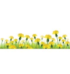 dandelions flower isolated vector image