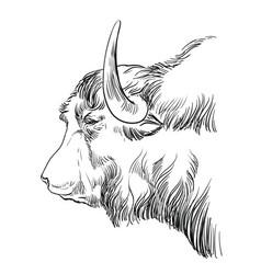 Head yak hand drawing vector