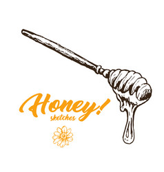 Honey sketch spoon honey hand drawn superfood vector
