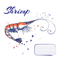 Ink hand drawn shrimp or prawn concept for vector