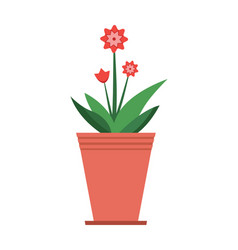 mandevilla plant in brown pot vector image