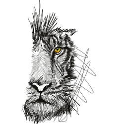 sketch of tiger face vector image