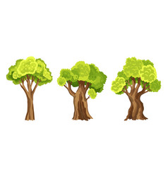 trees with green leafage set abstract stylized vector image