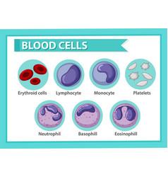 Type blood cells vector