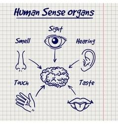 Synopsis of human sense organs sketch vector image