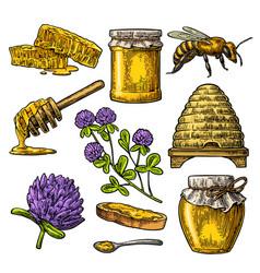 honey set jars of honey bee hive clover vector image vector image