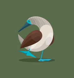 Blue-footed boobies mating dance vector