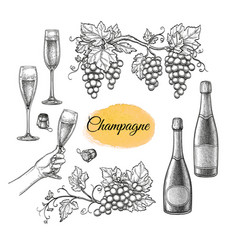 champagne big set vector image