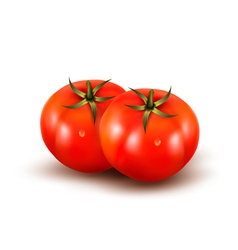 Tomatoes isolated on on white background vector