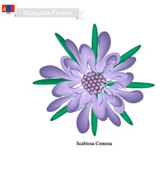 Scabiosa Comosa National Flower of Mongolia vector image vector image