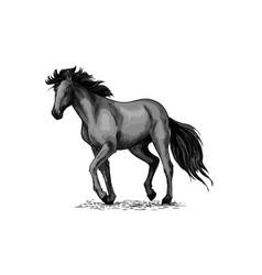 horse sketch of black arabian stallion vector image