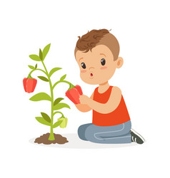 Cute little boy picking pepper kid playing in the vector