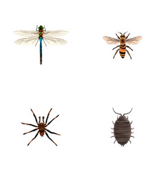 set of insect realistic symbols with dragonfly vector image