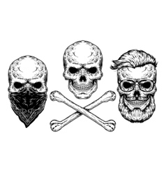 a skull and crossbones vector image