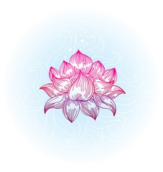Lotus in hand-drawn style vector