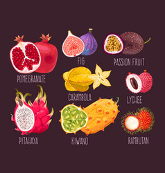 Set exotic fruit vector
