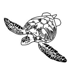 hand draw sea turtle vector image