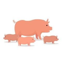 Pigs Flat Design On White vector image vector image