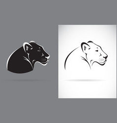 Black panther on white background and gray vector