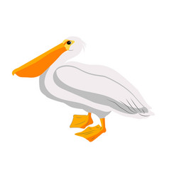 pelican bird icon on white background vector image