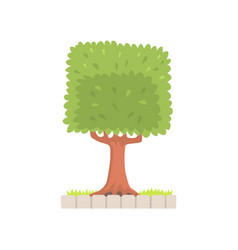Green tree with a square crown vector